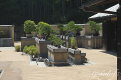 Showa Kinen Koen Bonsai Garten