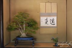 Showa Kinen Koen Bonsai Garten