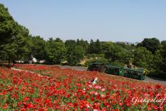 Showa Kinen Koen Bimmelbahn Komorebi no Sato