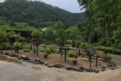 Bonsai Sammlung